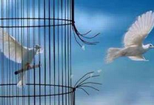 Uccello che scappa dalla gabbia